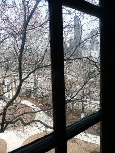Tree, courtyard, and Chicago. Look, it's the Sears Tower!